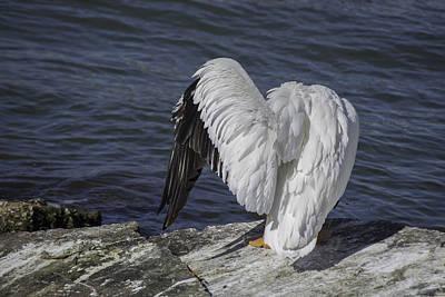 Shy Pelican Art Print by Diego Re