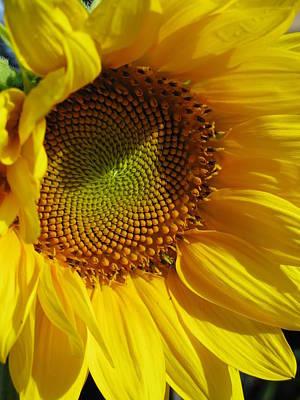 Shy Sunflower Art Print by Laura Corebello