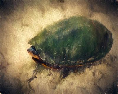 Shy Turtle Art Print