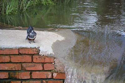 Woodpecker Mixed Media - Shy Woodpecker By Waterfall by Steve Arnold