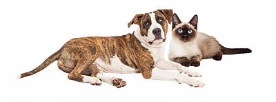 Siamese Photograph - Siamese Cat And Mixed Breed Dog by Susan Schmitz