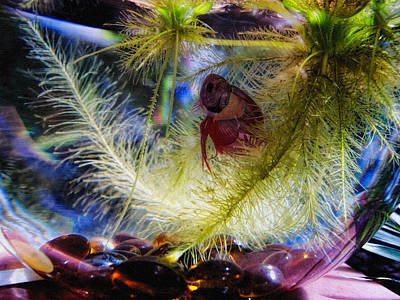 Photograph - Siamese Fighting Fish 3 by Dawn Eshelman