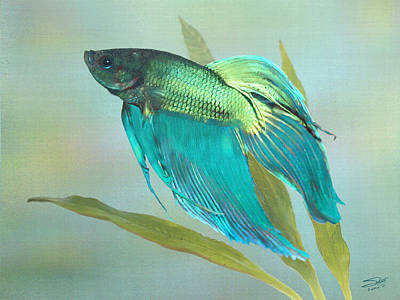 Siamese Fighting Fish Print by Schwartz