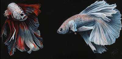 Siamese Fighting Fish  Art Print by Wayne Pruse