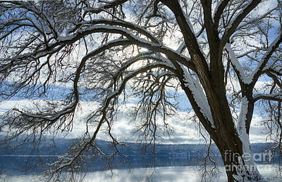 Photograph - Siberian Elm by Idaho Scenic Images Linda Lantzy