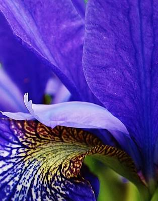 Photograph - Siberian Iris Abstract by Bruce Bley