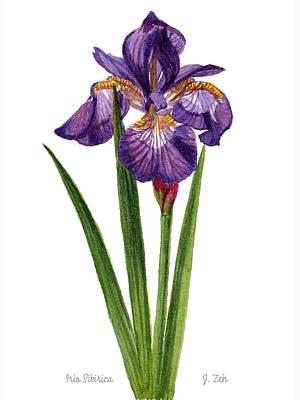 Painting - Siberian Iris II - Iris Sibirica by Janet Zeh