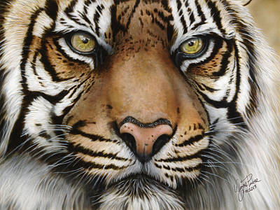 Siberian Tiger Closeup Original