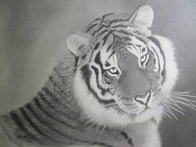 Drawing - Siberian Tiger   by Janet Hinshaw