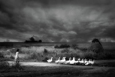 Goose Wall Art - Photograph - Sicily by Holger Droste