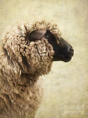 Mammals Royalty-Free and Rights-Managed Images - Side Face Of A Sheep by Priska Wettstein