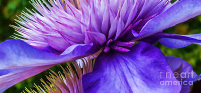 Photograph - Side View Clematis by Em Witherspoon