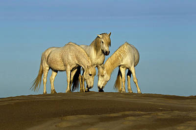 Grace Photograph - Side View Of Camargue Horses, Southern by Adam Jones