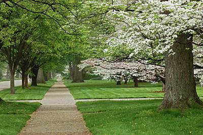 Audubon Park Photograph - Sidewalk And Flowering Dogwood Trees by Adam Jones
