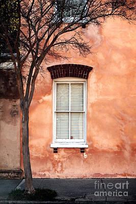 Photograph - Sidewalk Tree by John Rizzuto