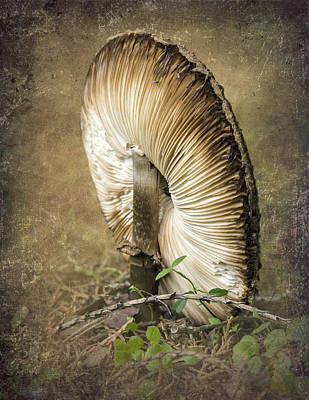 Photograph - Sideways Mushroom by Angie Vogel