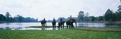Wetlands Photograph - Siem Reap River & Elephants Angkor Vat by Panoramic Images