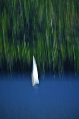 Photograph - Sierra Sailing by Sherri Meyer