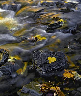 Sierra Stream Art Print