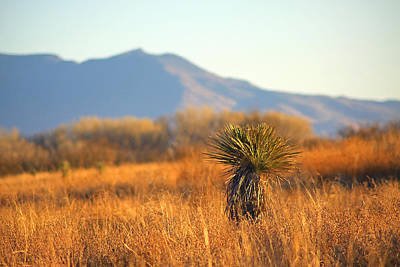 Photograph - Sierra Vista Arizona Landscape by Candace Zynda