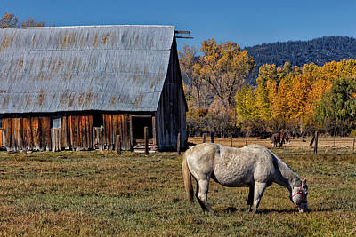 Photograph - Sierraville Horse by Kathleen Bishop