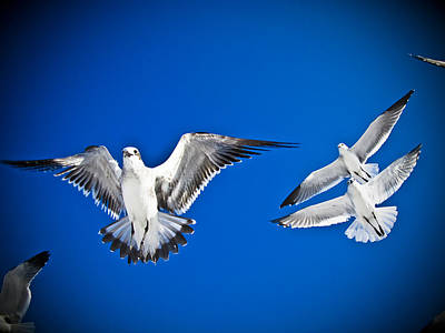 Siesta Key Sea Gulls Art Print by Andrea Floyd