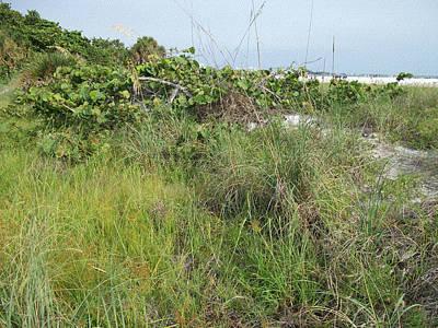 Asphalt Mixed Media - Siesta Keys Sand Dunes by Skyler Tipton