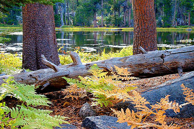 Photograph - Siesta Lake by Frank Lee Hawkins