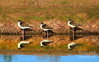 Photograph - Siesta Time by Robert Bales