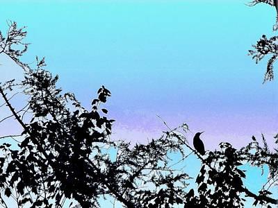 Blackbird Mixed Media - Sightseer by Mike Breau