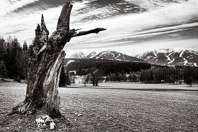 Photograph - Sign Of A Harsh Alpine Winter by Menega Sabidussi