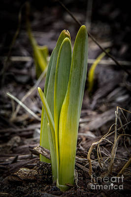 Photograph - Sign Of Spring 2 by Ronald Grogan