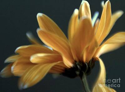 Photograph - Signature Daisy by Mary Lou Chmura