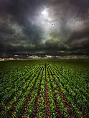 Winter Storm Photograph - Signs Of Life by Phil Koch