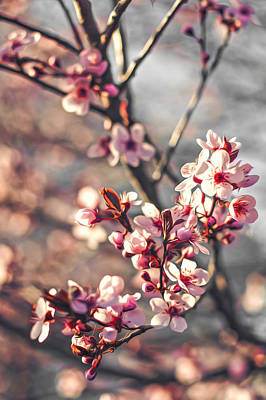 Art Print featuring the photograph Signs Of Spring by Joshua Minso