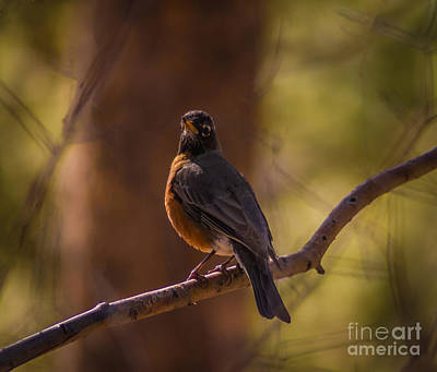 Signs Of Spring Art Print by Mitch Shindelbower