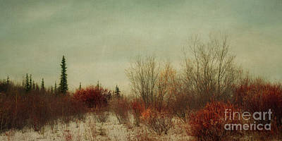 Pine Trees Photograph - Signs Of Winter by Priska Wettstein