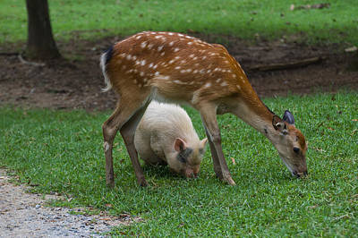 Digital Art - Sika Deer And Pot Bellied Pig by Chris Flees