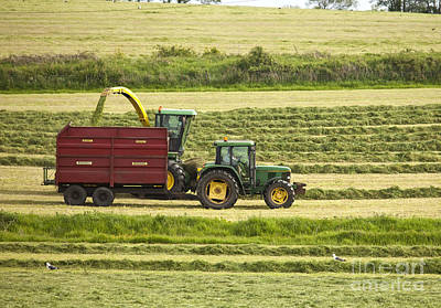 Photograph - Silage Harvesting by Liz Leyden