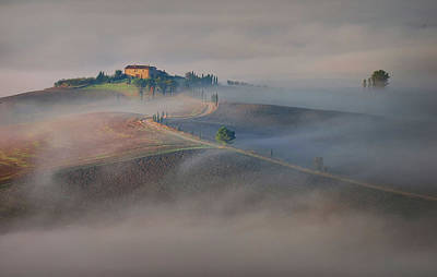 Cypress Photograph - Silence by Ales Komovec