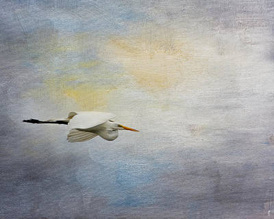 Photograph - Silent Flight by Jai Johnson