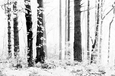 Photograph - Silent Mist by Athena Mckinzie