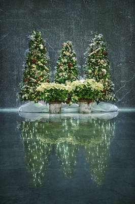 Poinsettia Photograph - Silent Night by Evelina Kremsdorf