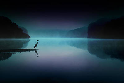 Heron Photograph - Silent Night by Rob Blair
