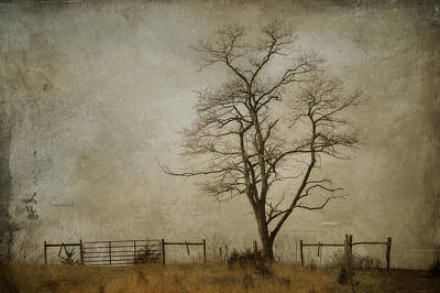 Silent Solitude Art Print by Kathy Jennings
