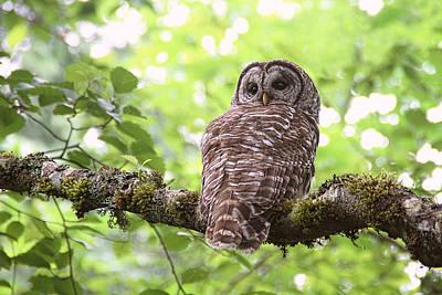 Silent Watcher Of The Woods Art Print