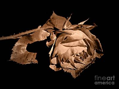 Photograph - Silently Sepia by Chalet Roome-Rigdon