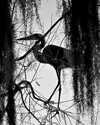 Photograph - Silhouette In Black And White by Carol  Bradley