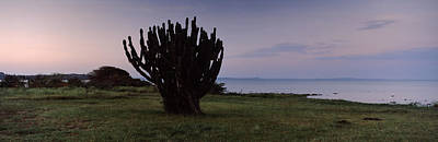 Silhouette Of A Cactus At The Lakeside Art Print