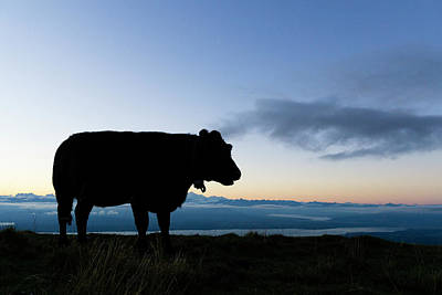 Chillon Photograph - Silhouette Of A Cow At Dawn Overlooking by Raffi Maghdessian